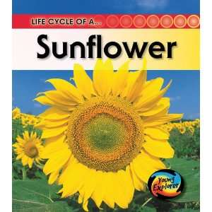 of a Sunflower (Life Cycles) (9781844433124): Clare Hibbert: Books
