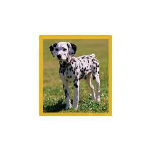 New Magnetic Bookmark Dalmatian Puppy High Quality Modern