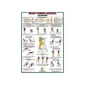Leg Muscles Chart: Sports & Outdoors