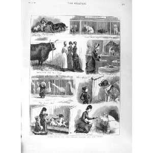 : 1881 BIRMINGHAM CATTLE DOG SHOW PIGS ANIMALS PRINT: Home & Kitchen