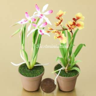 Nodosa miniature Clay Flower Plant Garden Wedding Favors Gift