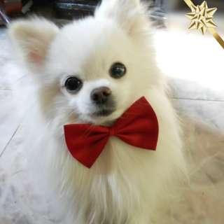 Fashion Color New Dog Cat Pet Collar Accessory Bow Tie Necktie (#1998