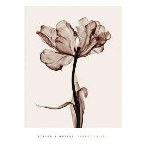 Art Poster Print   Parrot Tulips I   Artist: Steven N Meyers   Poster