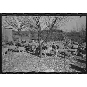 borrower,Tom Greene County,Texas:  Home & Kitchen